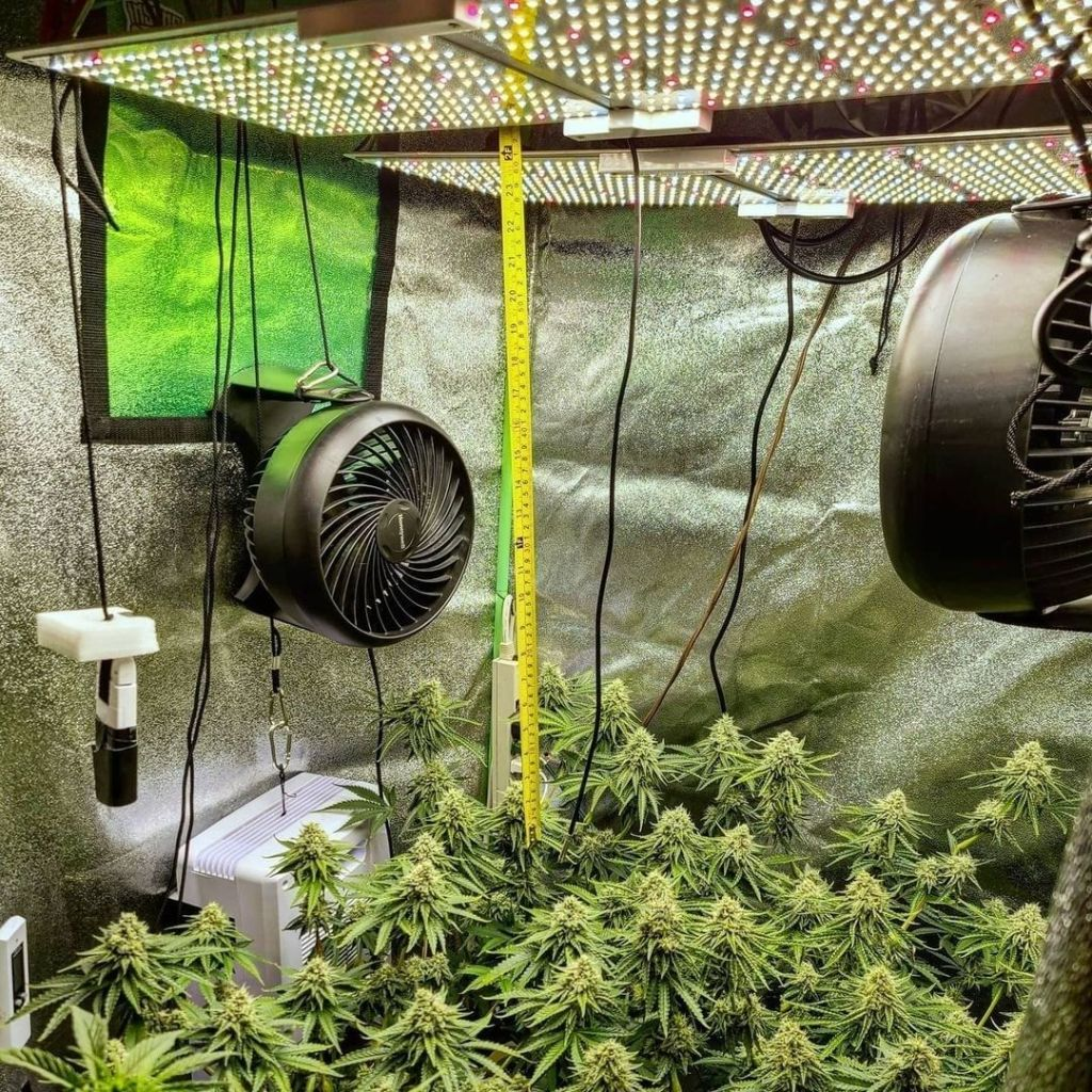 hang led grow light from plants