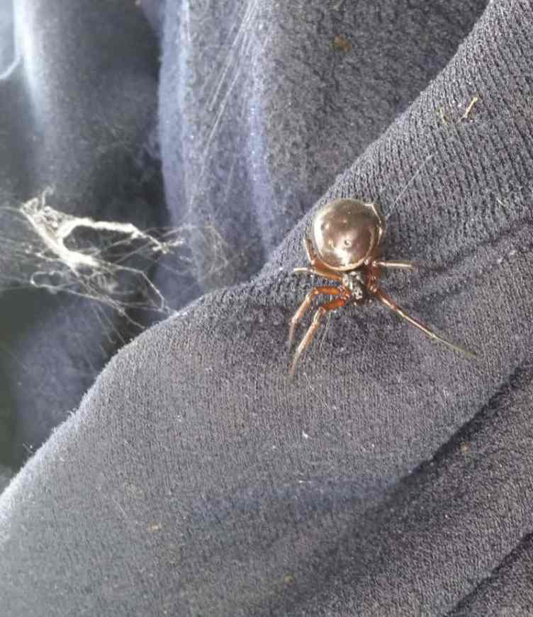 False Widow UK