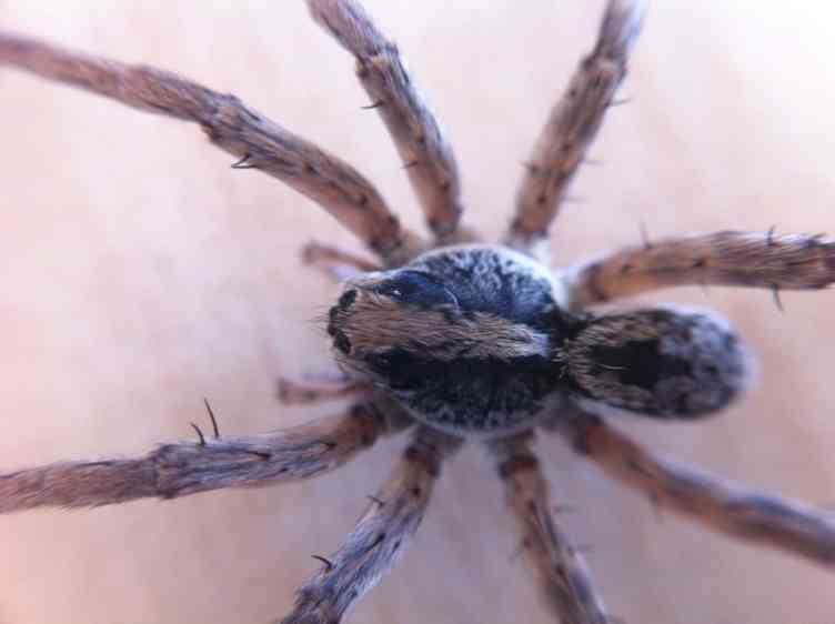 Spider Closeups