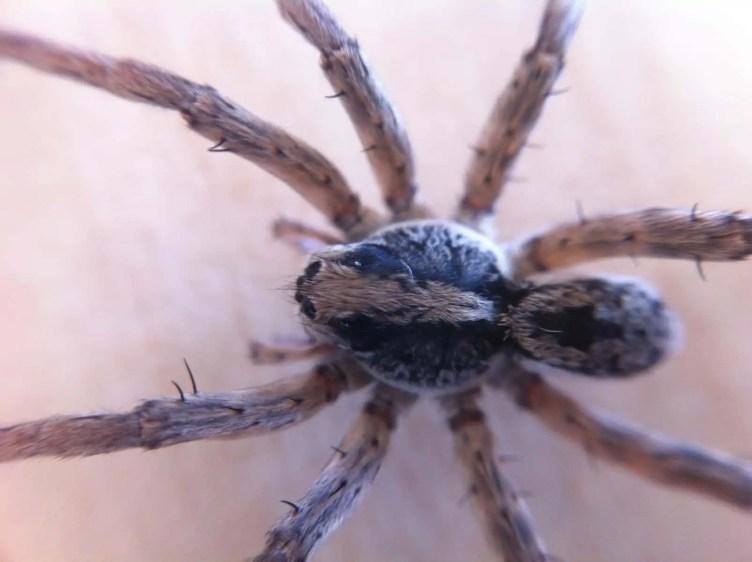 Spider Closeups