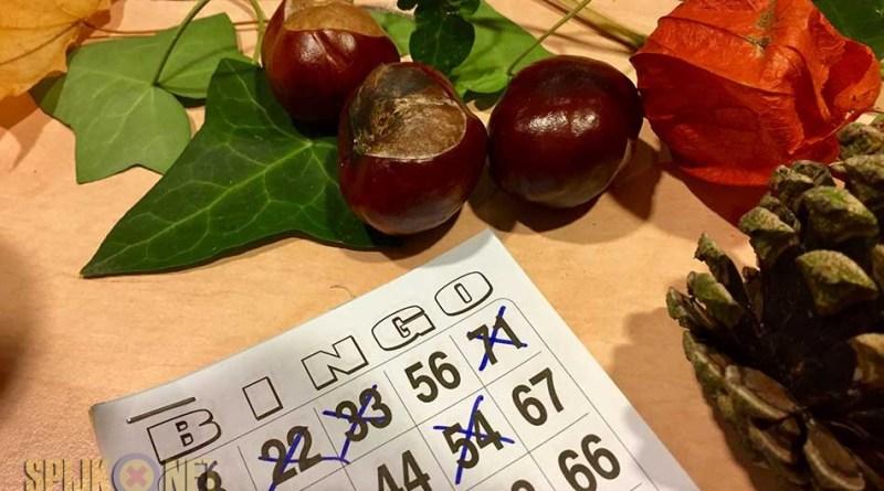 oktoberfest bingo