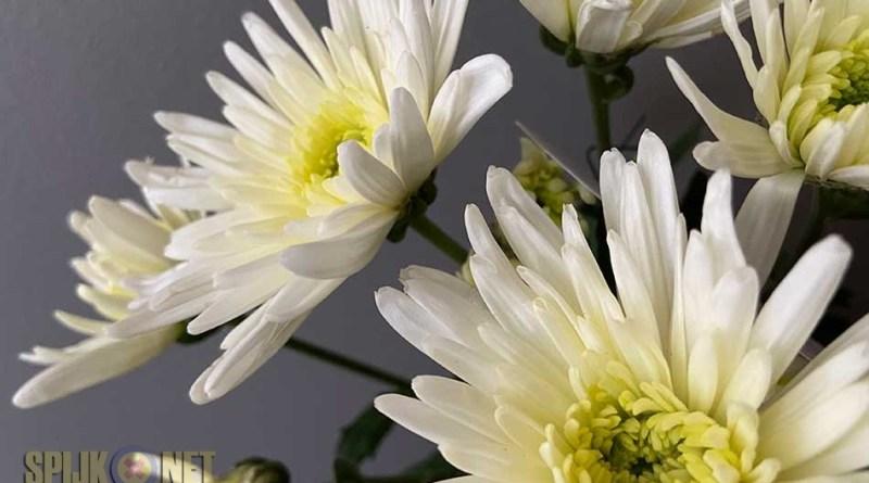 bloemetje pkn