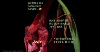 bloemen-drive