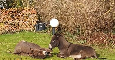 twee lieve ezeltjes