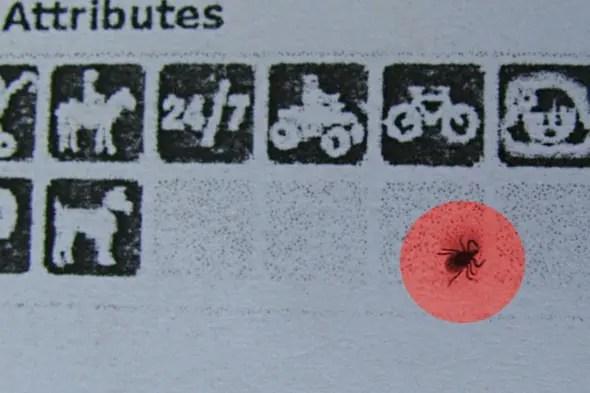 Zecke im Listing Artikelbild