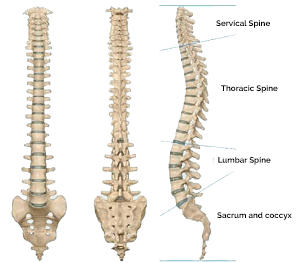 Spine Specialist in Pune, Spine Surgeon Pune, Spine Treatment in Pune