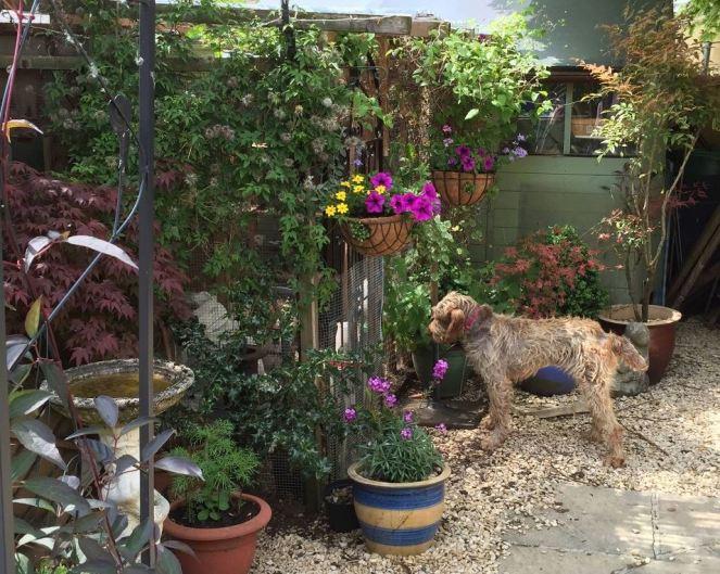 Veva explores the garden
