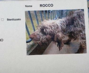 Rocco Prima