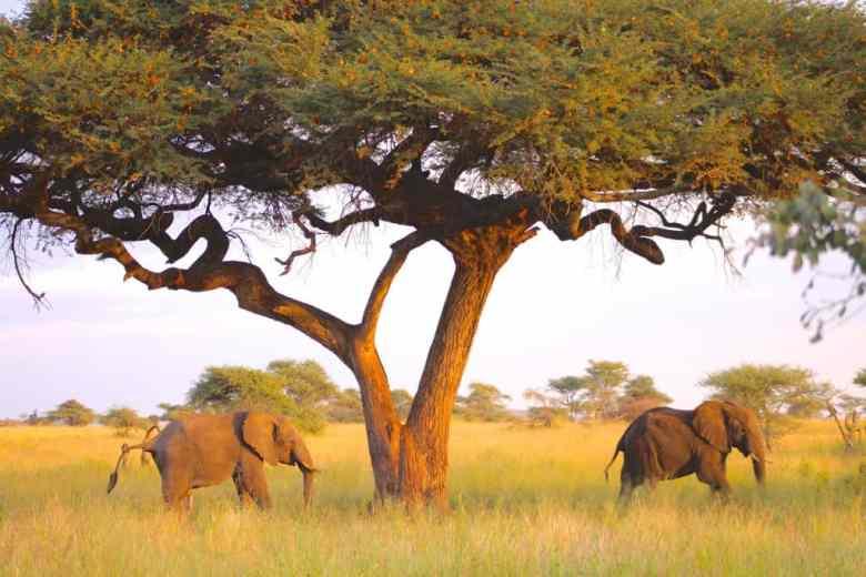 elephants in the serengeti travel bucket list destination