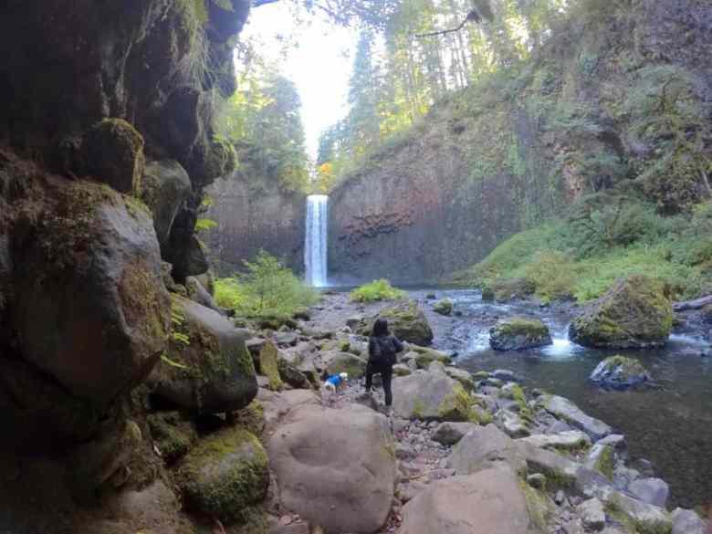 girl and dog admire abiqua falls