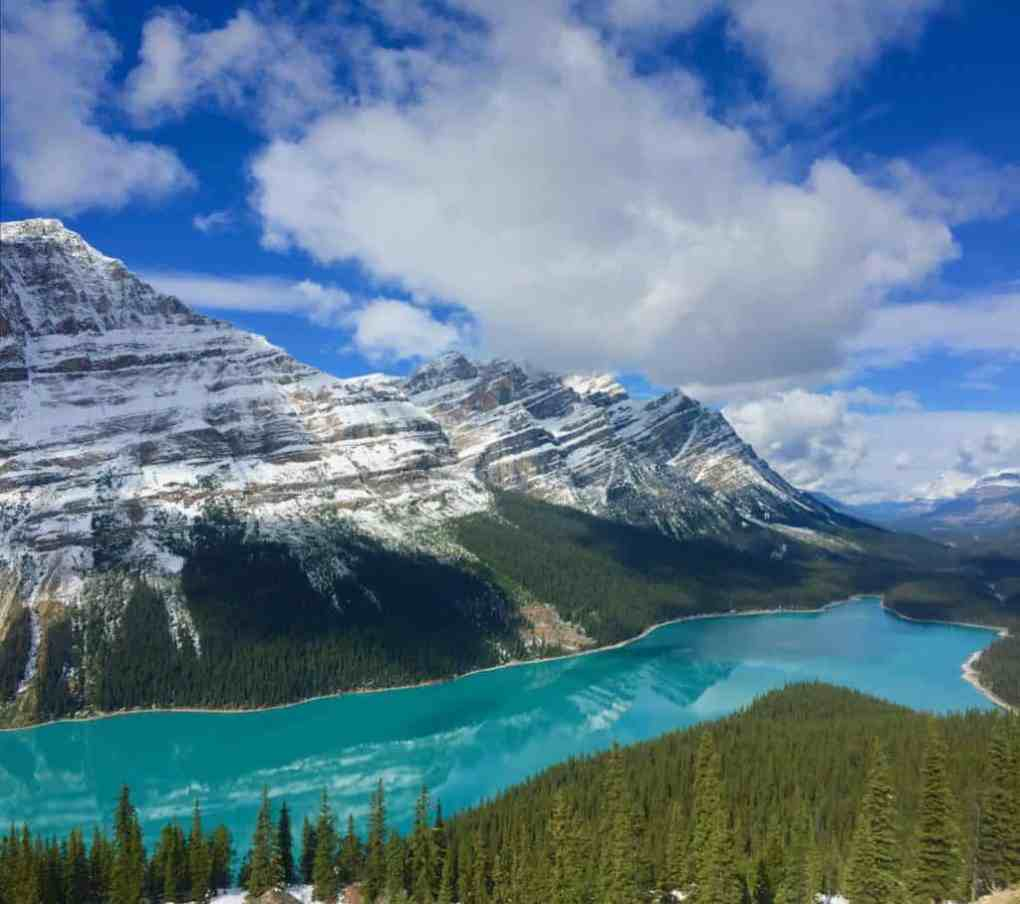 peyto lake reflection in icefields parkway