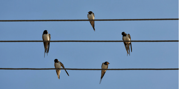 Birds on a wire, photo by Collin Key
