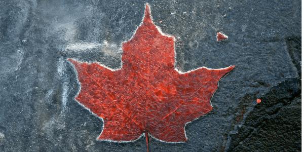 Frozen maple leaf, photo by Aaron Poach