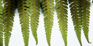 Green fern, photo by Sam Cox