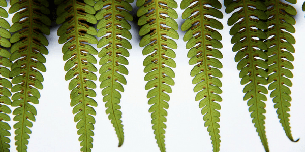 Green fern, photo by Sam Cox