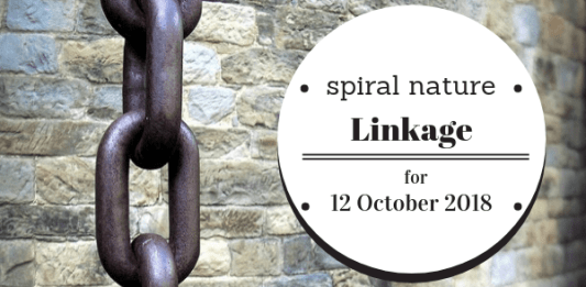 Spiral Nature Linkage for Friday, 12 October 2018