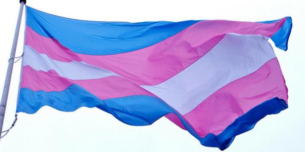 Transgender flag, photo by torbakhopper