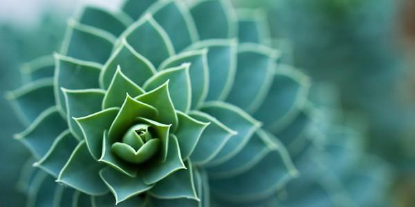 Greenery, photo by