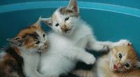 Kittens, photo by Yafut