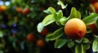 Orange, photo by Rafael Castillo