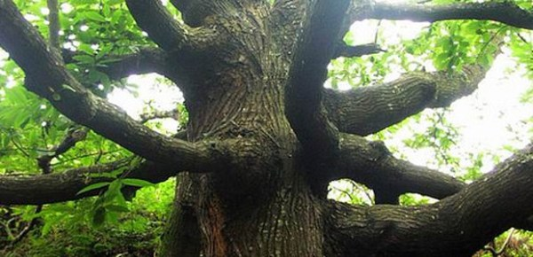 Tree, photo by Romain Vallet