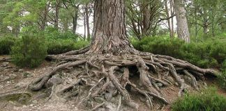 Tree roots, photo by pink fuzy rat