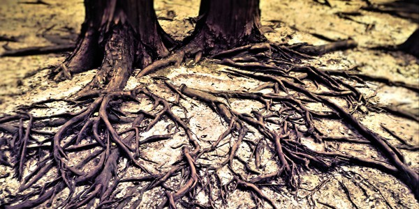 Tree roots, photo by SarahTz