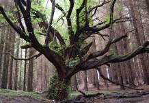 Tree, photo by subflux