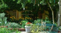 Urban garden, photo by PerennialsPhotos