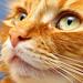 cat spirit animal