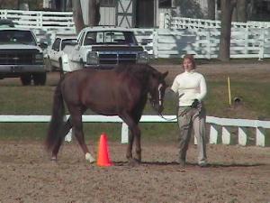 Sport Horse