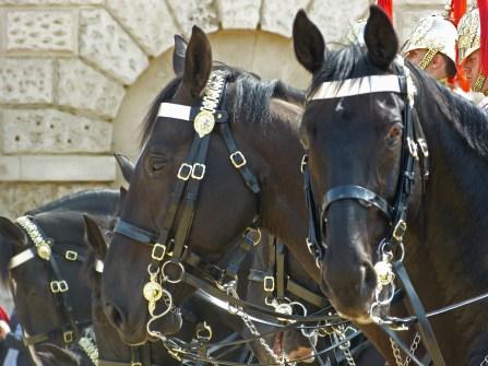 guardhorses1