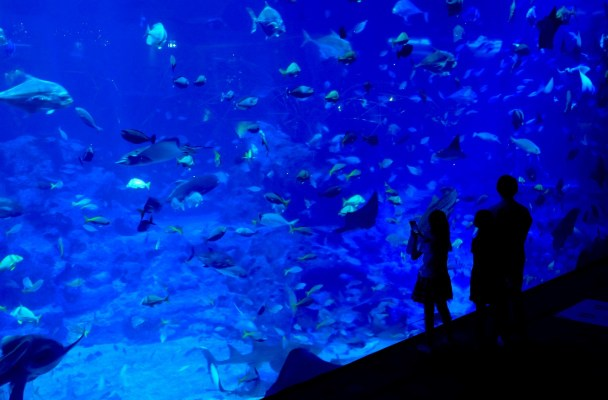 aqua gastronomy central ocean habitat