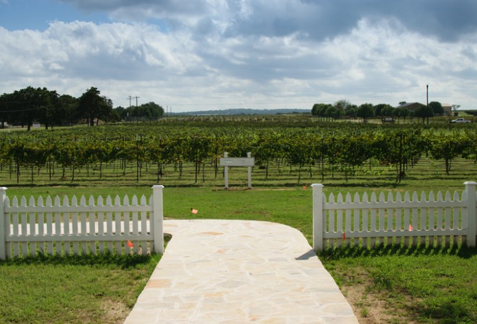 up-and-coming wine regions - texas hill country
