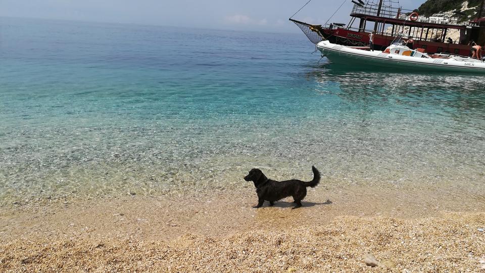 Ein Traum für Mensch und Hund :)