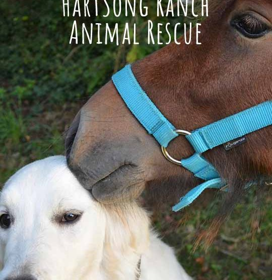 #SpirithorseGives for January – Hartsong Ranch Animal Rescue