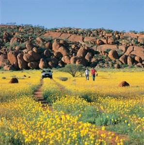 Western Australia Wildflowers Tours