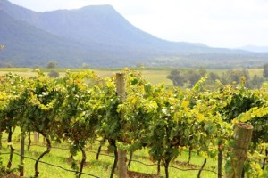 hunter  valley wine tour