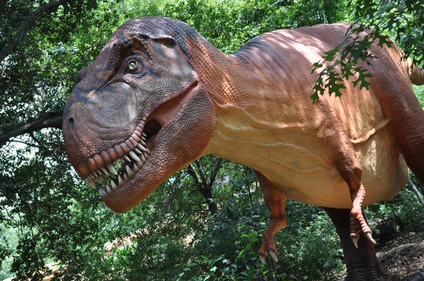 Images About T Rex