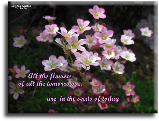 Spiritual Sayings Flowers