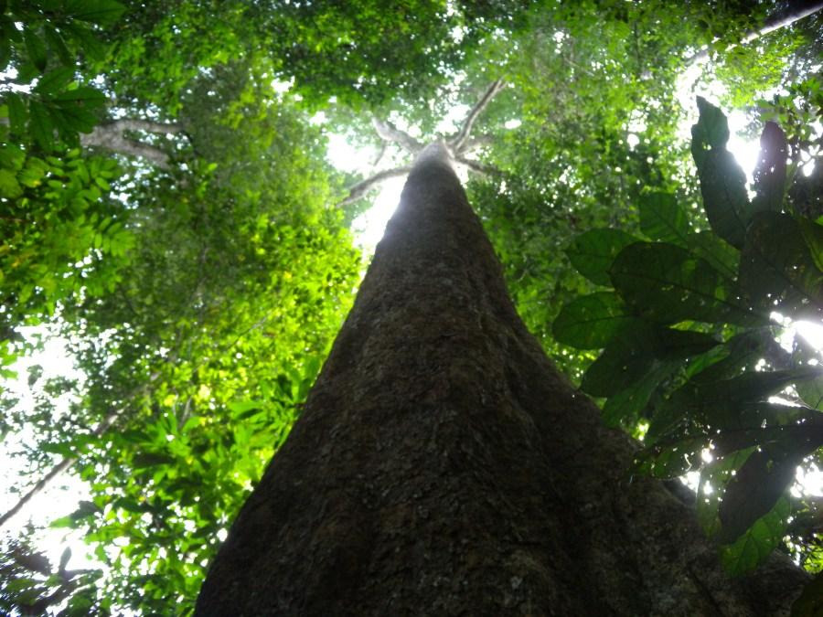 Tree for SB