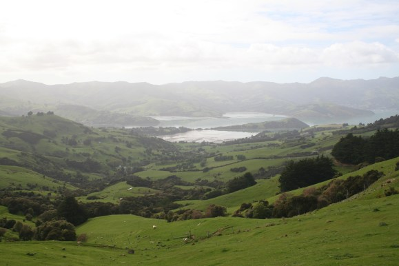 Pastoral scene in New Zealand, Banks Peninsula in New Zealand