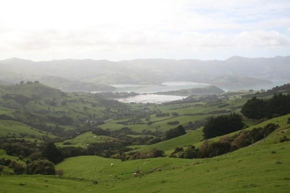 Pastoral scene in New Zealand, Banks Peninsula in New Zealand