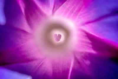 Spirituelles Erwachen Herz violett Spirituelle Gemeinschaft