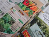 Gratis frø til kjøkkenhagen, grønnsaker og urter