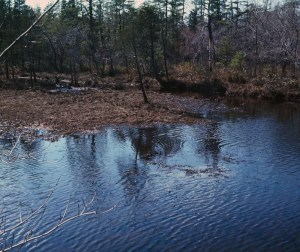 Bog in the Pine Barrens