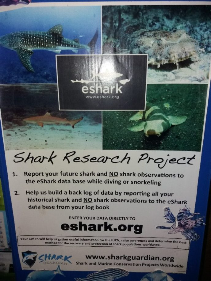 Shark Research Project at this divingschool on Phi Phi Islands