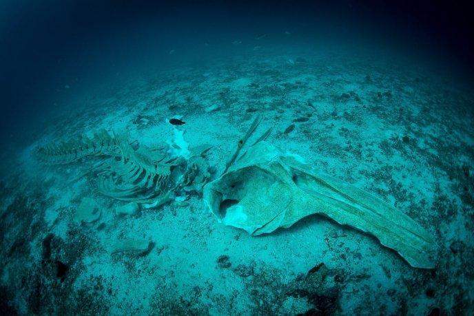 Koh Haa walvis skelet op 33 meter diepte