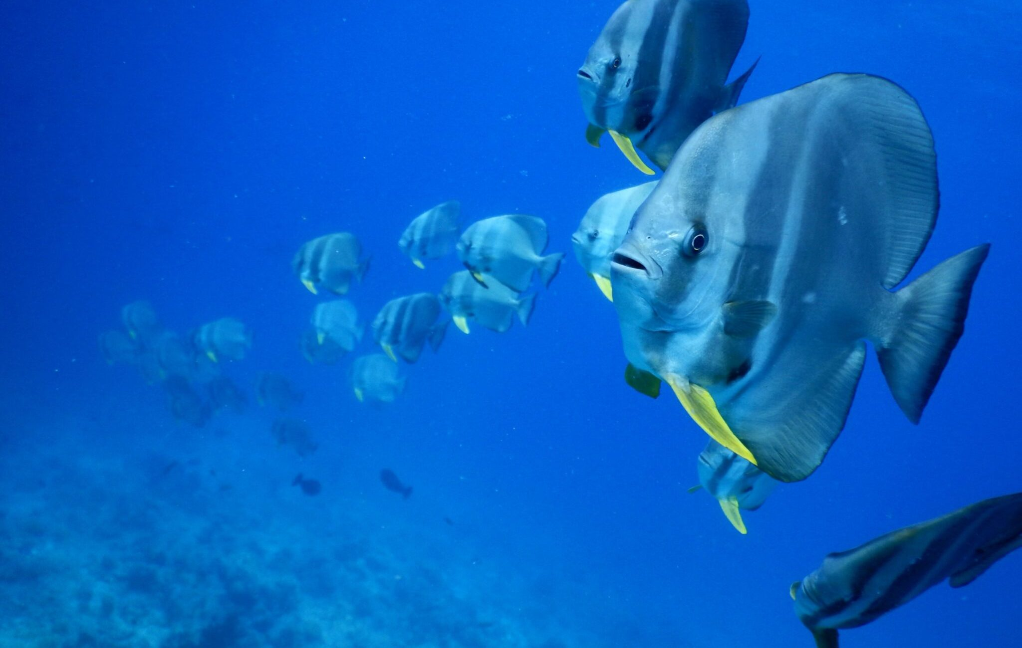 Bafish picture with Nikon Coolpix on the Maldives