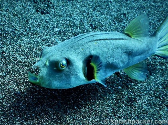 Quality & Sharpness of Nikon Coolpix Dive Camera